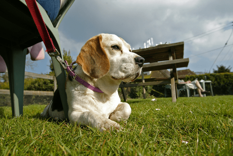 Dog Friendly Pubs in Lancashire
