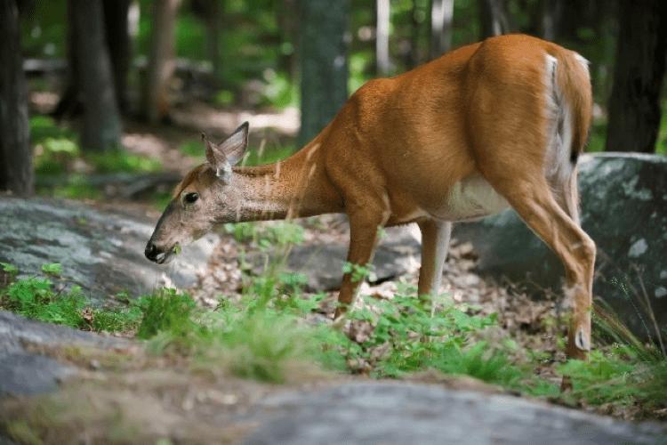 Wildlife at Holgates