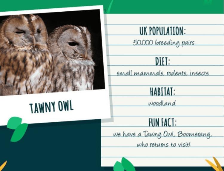 Wildlife Animal Spotting - Lake District