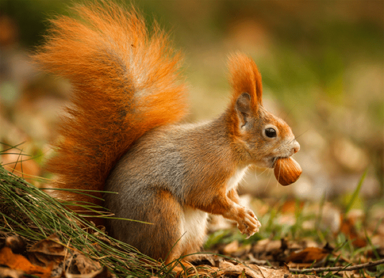 Getting Wild in the Lakes: A Guide for Wildlife Lovers