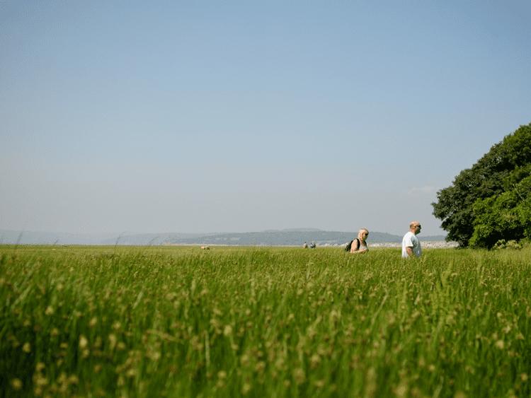 Lancashire Park's Ambitious Tree Plan