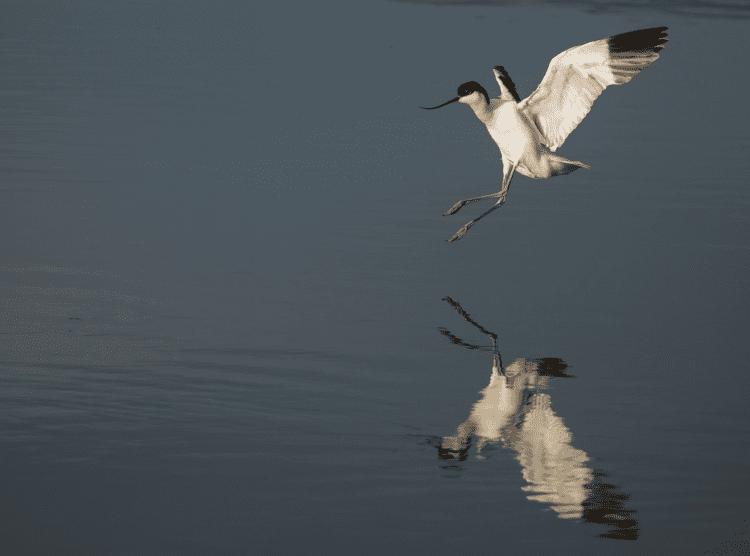 The Wonder of Winter Birds