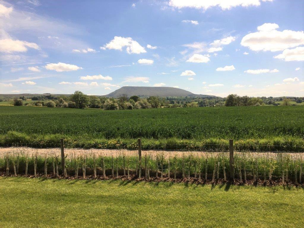 2021 ABI Blenheim at Holgates Ribble Valley (8)-min