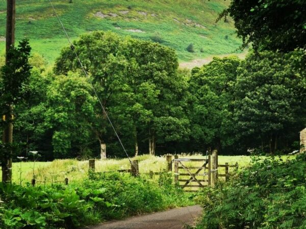 Bowland AONB and Forest